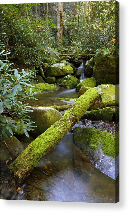 Tennessee Acrylic Print featuring the photograph Moss Flourishing by Andrew McInnes