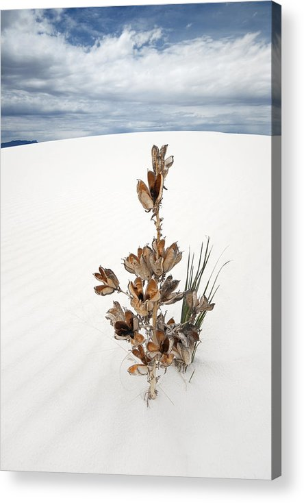 White Sands Acrylic Print featuring the photograph Solitude by Ryan Heffron