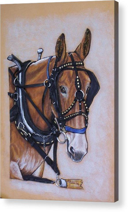 Horses Acrylic Print featuring the painting Augustus by Lilly King