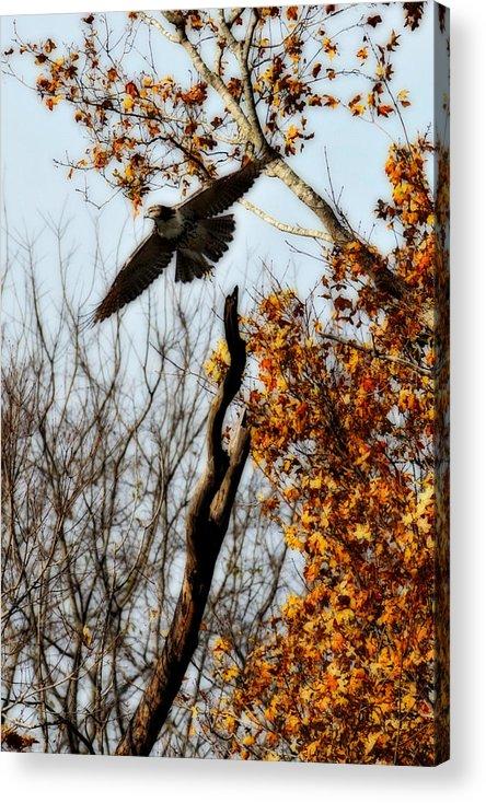 Flight Acrylic Print featuring the photograph Autumn Flight by Alan Skonieczny