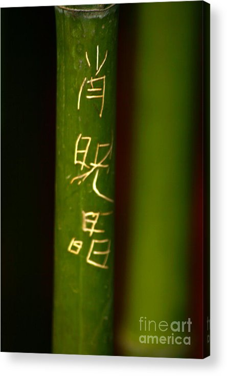 Bamboo Acrylic Print featuring the photograph Bamboo 02 by April Holgate