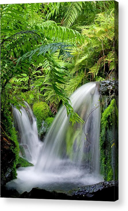 Water Acrylic Print featuring the photograph Clandestine by Andrea Cadwallader
