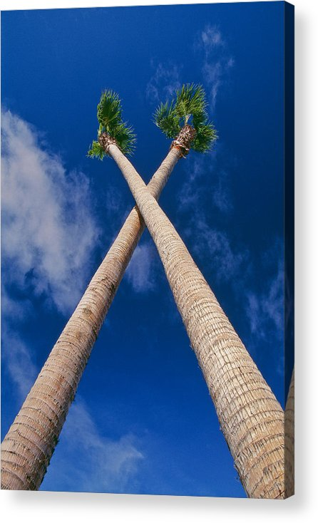 Blue Sky Acrylic Print featuring the photograph Crossed Palm Trees by Rich Iwasaki