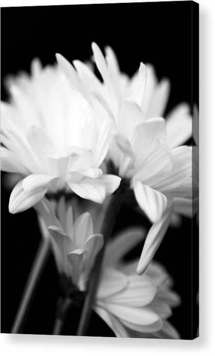 Floral Acrylic Print featuring the photograph Daises In Black And White by Ayesha Lakes