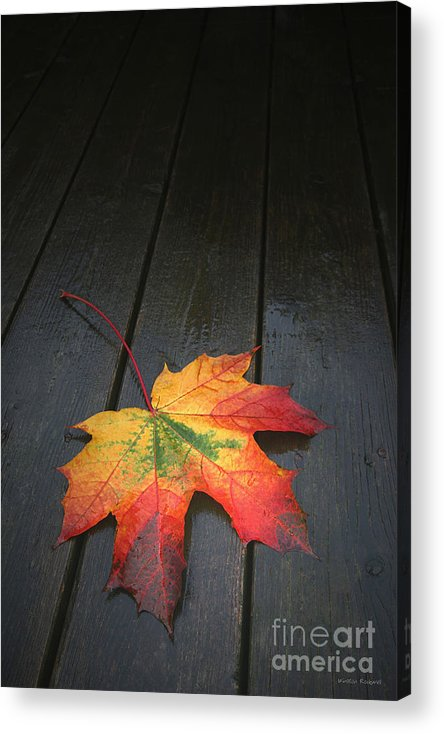 Leaf Autumn Fall Rain Color Acrylic Print featuring the photograph Fall by Winston Rockwell