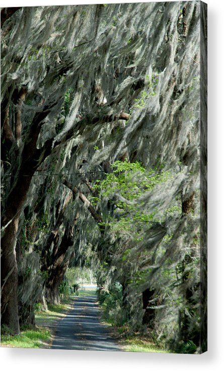 Moss Acrylic Print featuring the photograph Florida Road by David Campione