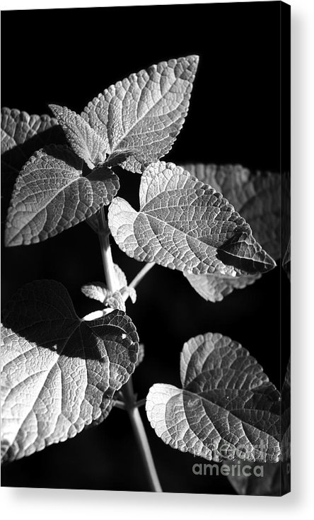 Light Acrylic Print featuring the photograph Light And Shadow by Jeannie Burleson
