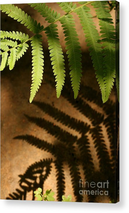 Fern Acrylic Print featuring the photograph My Shadow by Jeannie Burleson