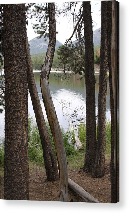 Trees Acrylic Print featuring the photograph Nature's Frame by Tracy Michicich