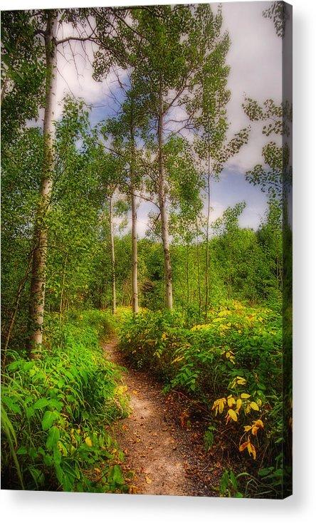 Acadia Acrylic Print featuring the photograph The Path by Joann Vitali