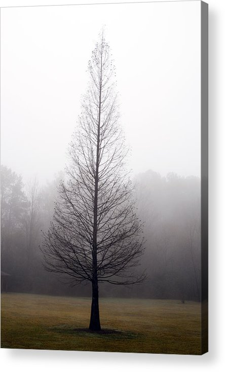 Scenic Acrylic Print featuring the photograph Tree In Fog by Ayesha Lakes
