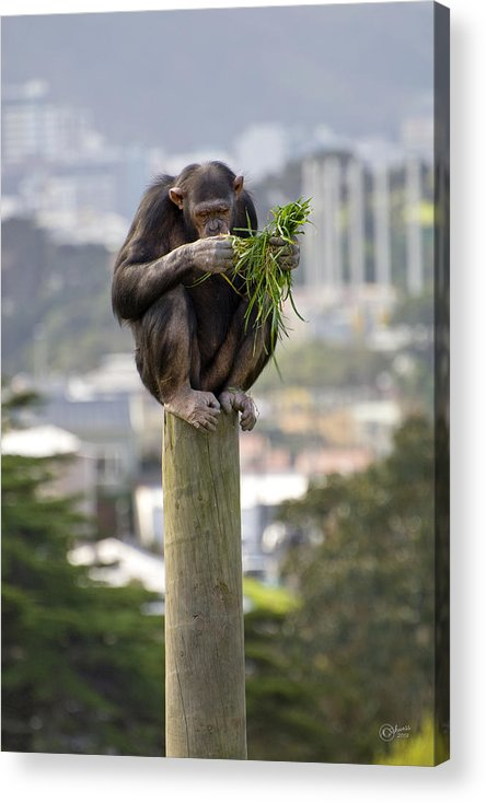 Zoo Acrylic Print featuring the photograph Urban Jungle by Andrea Cadwallader