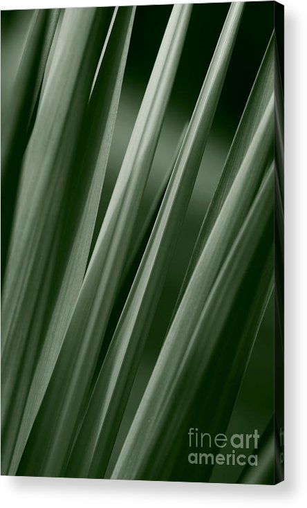 Abstract Acrylic Print featuring the photograph Yucca Spikes by Jeannie Burleson