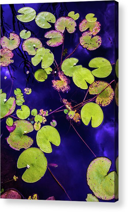 Nature Photography Acrylic Print featuring the photograph Little Pac Mans by Az Jackson