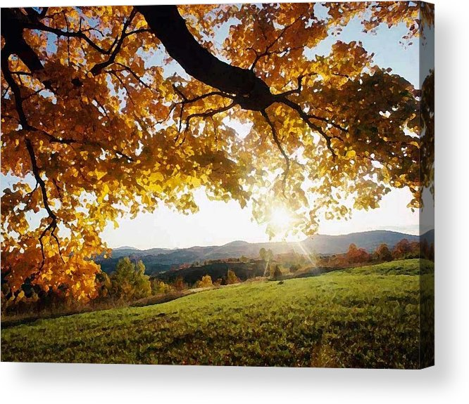 Macro Acrylic Print featuring the photograph Late In The Day And A Setting Sun by Dave Byrne