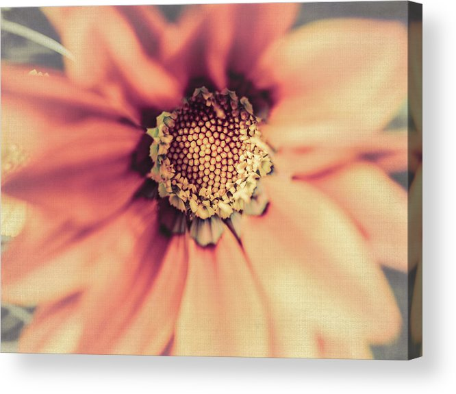 Flower Beauty Acrylic Print featuring the photograph Flower Beauty II by Marco Oliveira