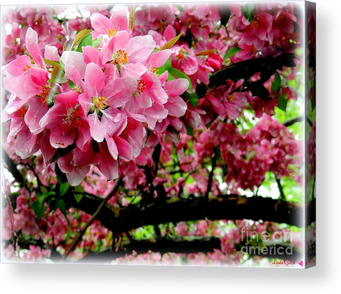 Flower Acrylic Print featuring the photograph In The Pink by Linda Galok