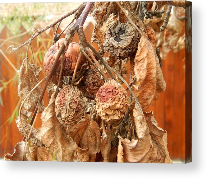Brown Acrylic Print featuring the photograph Autumn by Muntean Floare