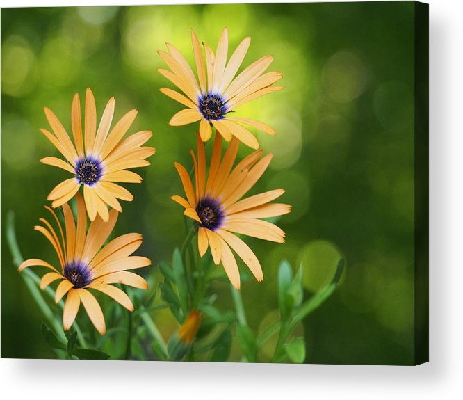 Flowers Acrylic Print featuring the photograph A Cheerful Symphony by Dorothy Lee