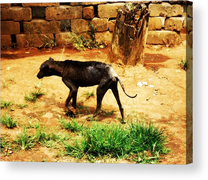Dog Acrylic Print featuring the photograph Alone And Starving by Tuntufye Abel