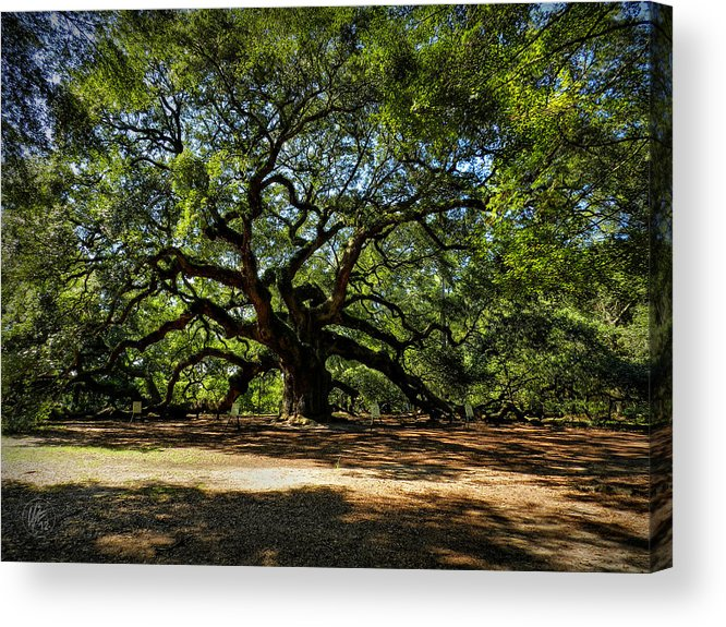 Beautiful Acrylic Print featuring the photograph Angel Oak 001 by Lance Vaughn