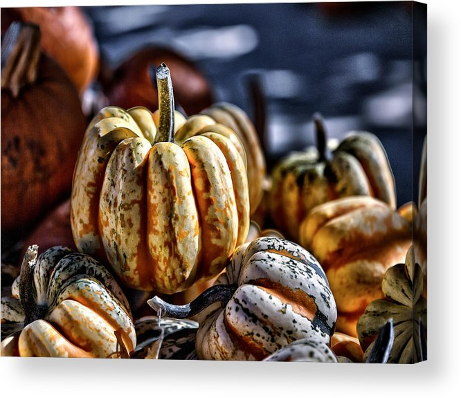 Squash Acrylic Print featuring the photograph Autumn Glow by Caitlyn Grasso