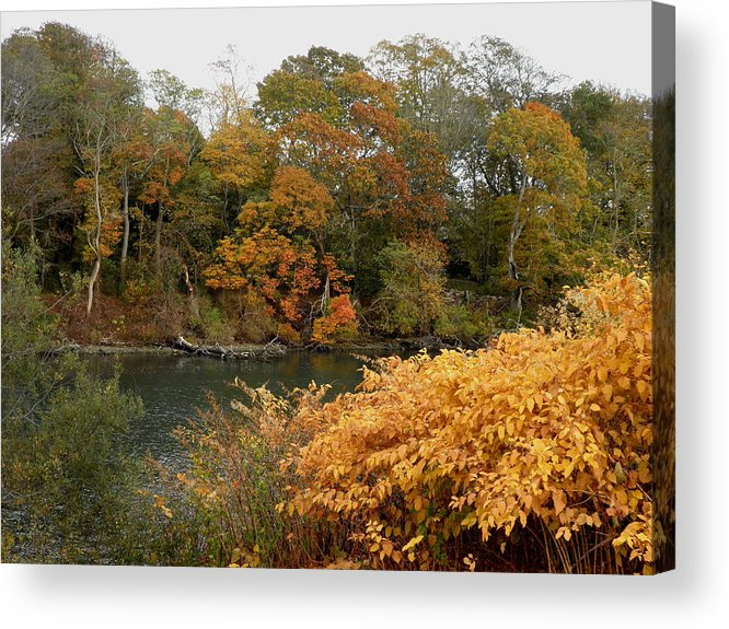 Autumn Trees Acrylic Print featuring the photograph Autumn On The Ocean by Kate Gallagher