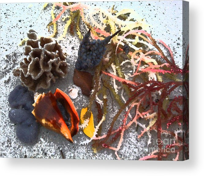 Beach Acrylic Print featuring the photograph Beach Treasures by Monika A Leon