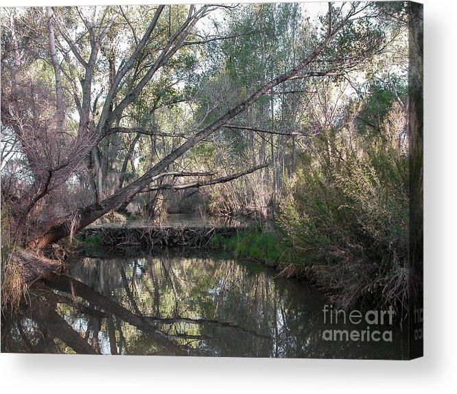 Beaver Acrylic Print featuring the photograph Beaver Dam by Al Andersen