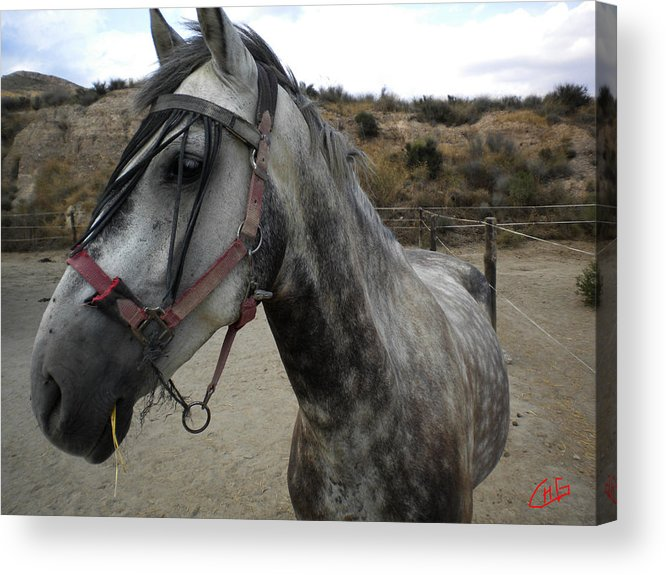 Colette Acrylic Print featuring the photograph Bella On The Ranch Almanzora Mountain Spain by Colette V Hera Guggenheim