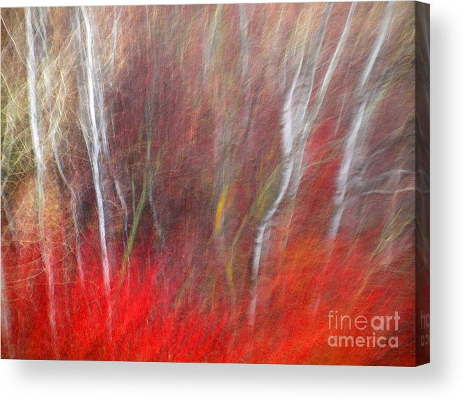 Blur Acrylic Print featuring the photograph Birch Trees Abstract by Tara Turner