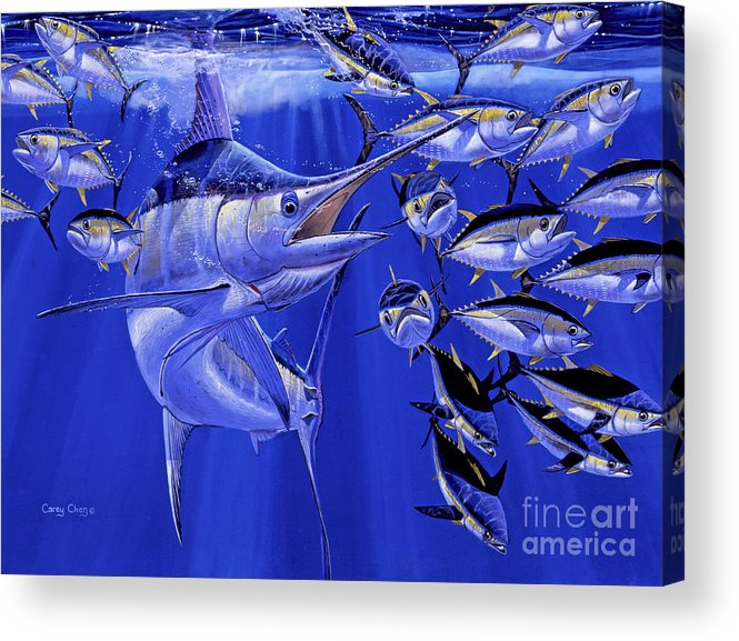 Blue Marlin Acrylic Print featuring the painting Blue Marlin Round Up Off0031 by Carey Chen