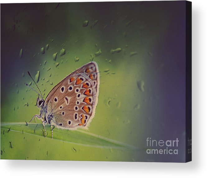 Butterfly Acrylic Print featuring the photograph Butterfly by Diana Kraleva
