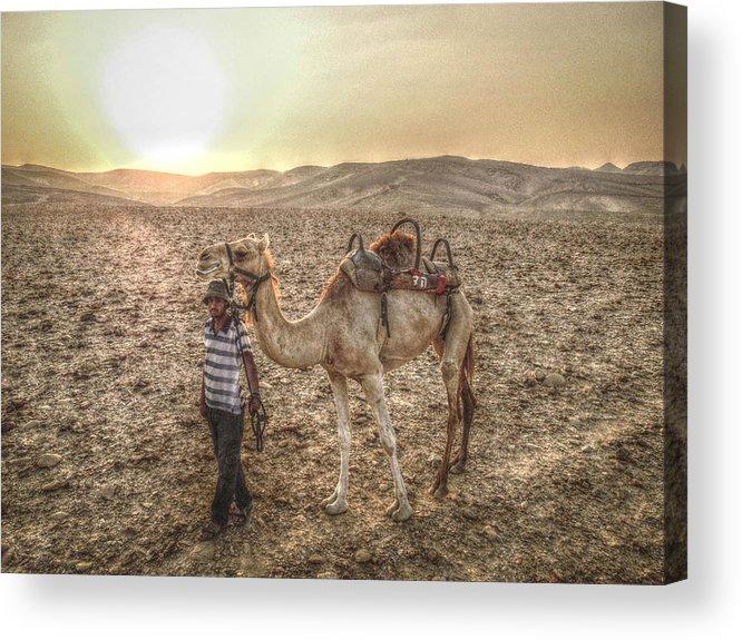 Africa Acrylic Print featuring the photograph Camel by Jordan Kaplan