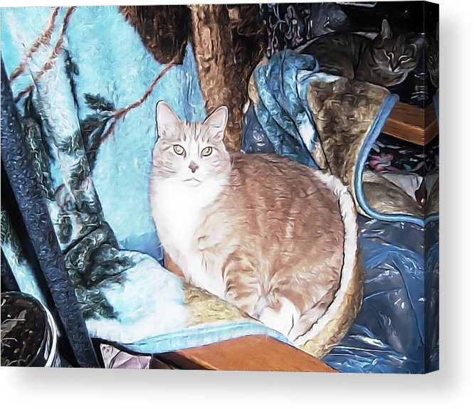 Acrylic Print featuring the photograph Cat Motif by Kilmeny Boates