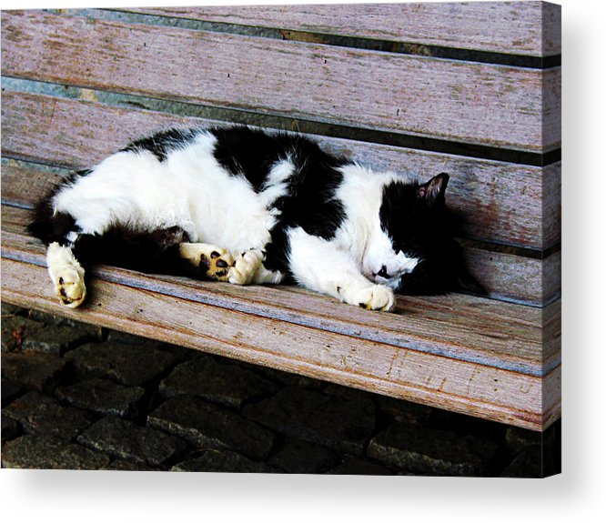 Cat Acrylic Print featuring the photograph Cat Sleeping On Bench by Susan Savad