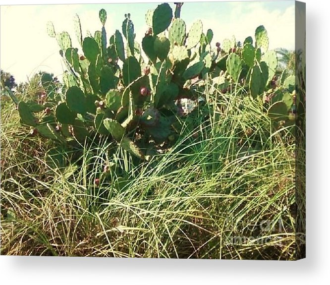 Catus Acrylic Print featuring the photograph Catus 1 by Michelle Powell