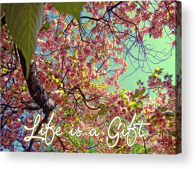 Quotes Acrylic Print featuring the photograph Cherry Blossoms And A Life Quote by Nishanth Gopinathan