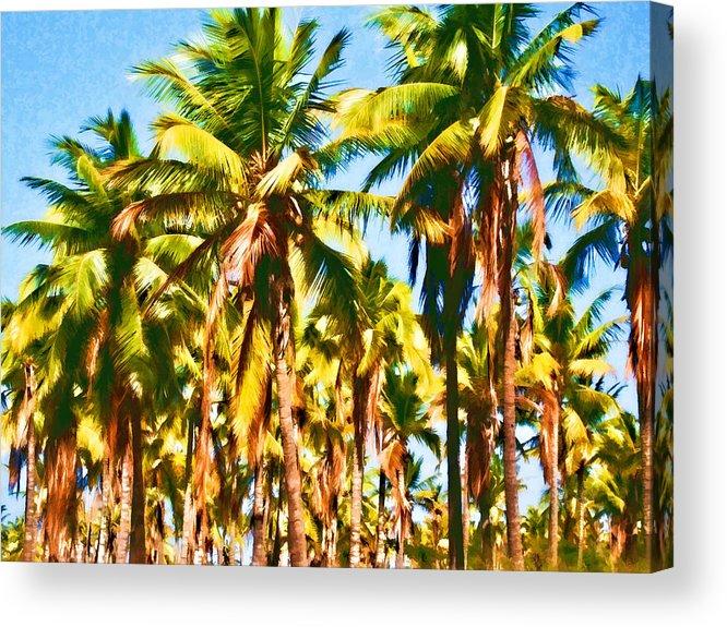 Coconut Trees Acrylic Print featuring the photograph Coconut Trees by Joe Carini