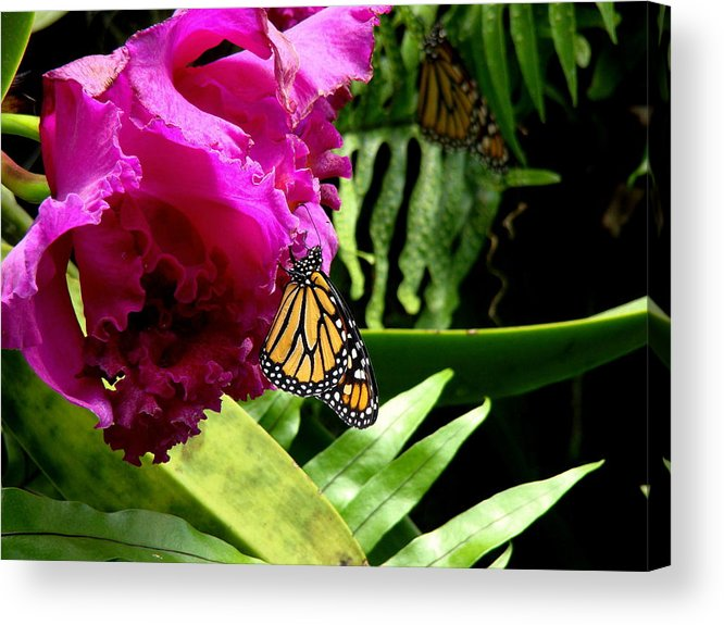 Fine Art Acrylic Print featuring the photograph Continuance by Rodney Lee Williams