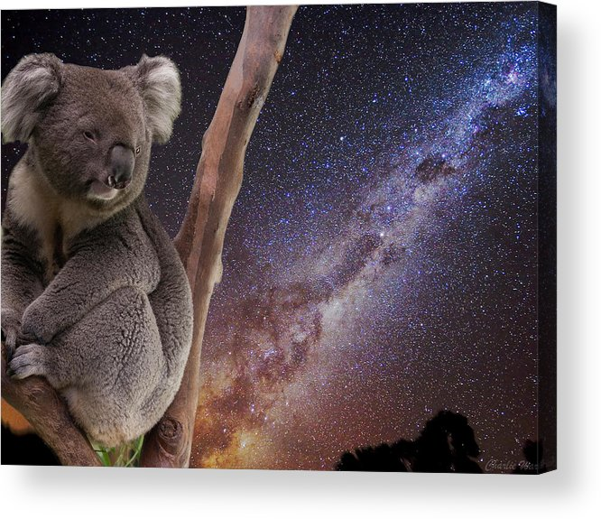 Australia Acrylic Print featuring the photograph Down Under by Charles Warren