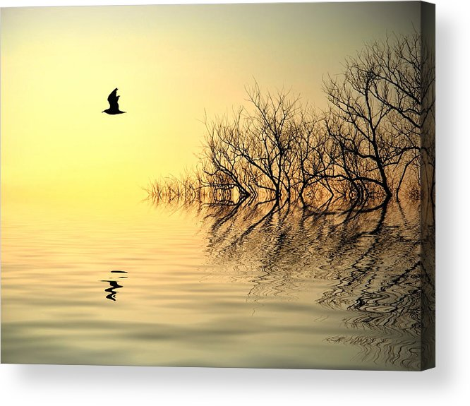 Reflections In Water Acrylic Print featuring the photograph Dusk Flight by Sharon Lisa Clarke
