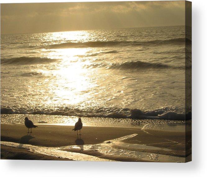 Beach Acrylic Print featuring the photograph Evening Stroll by Judith Morris