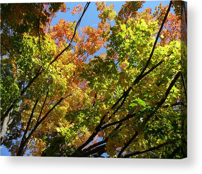 Fall Acrylic Print featuring the photograph Fall Color by Don Kosterman