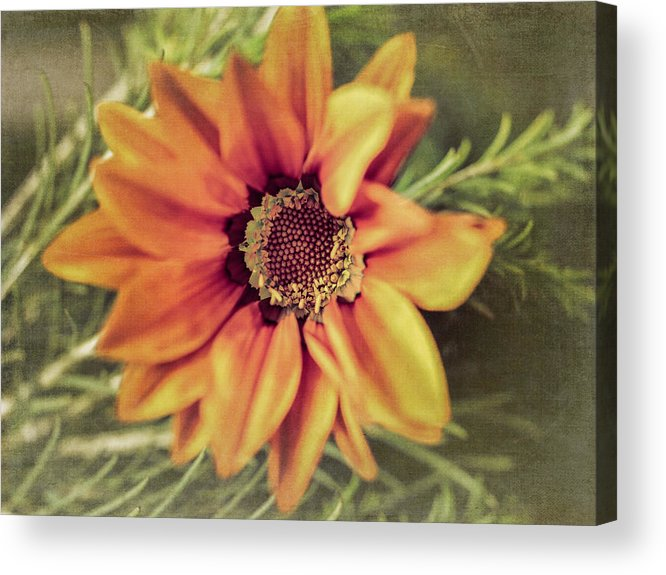 Flower Beauty Acrylic Print featuring the photograph Flower Beauty I by Marco Oliveira