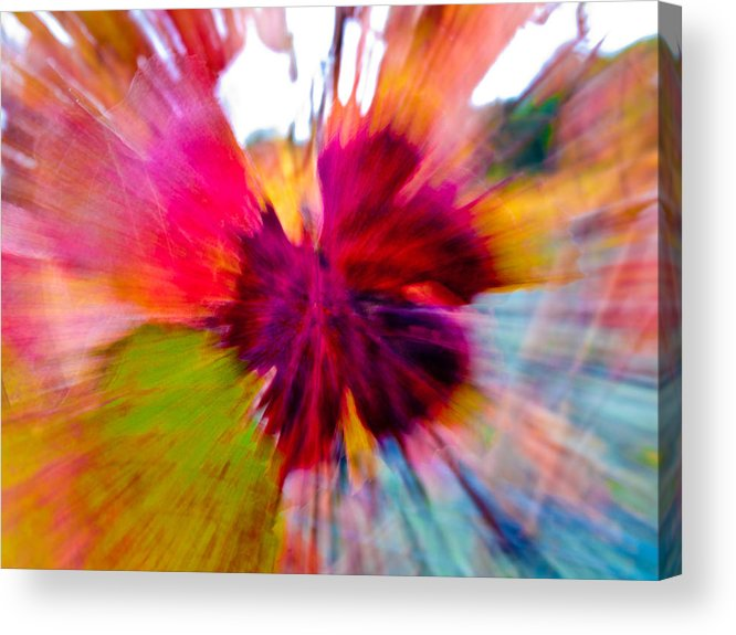 Grapevine Acrylic Print featuring the photograph Grape Vine Burst by Bill Gallagher