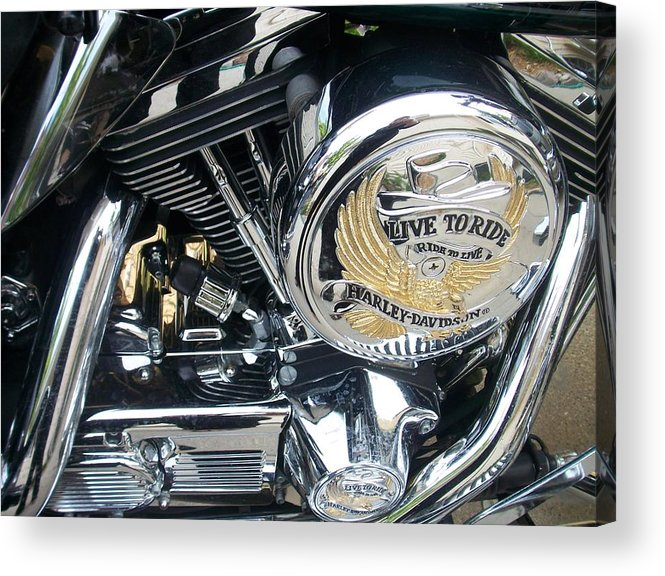 Motorcycles Acrylic Print featuring the photograph Harley Live To Ride by Anita Burgermeister