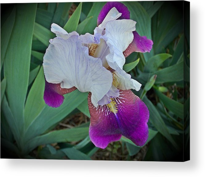 Acrylic Print featuring the photograph Hdr Iris by Regina McLeroy