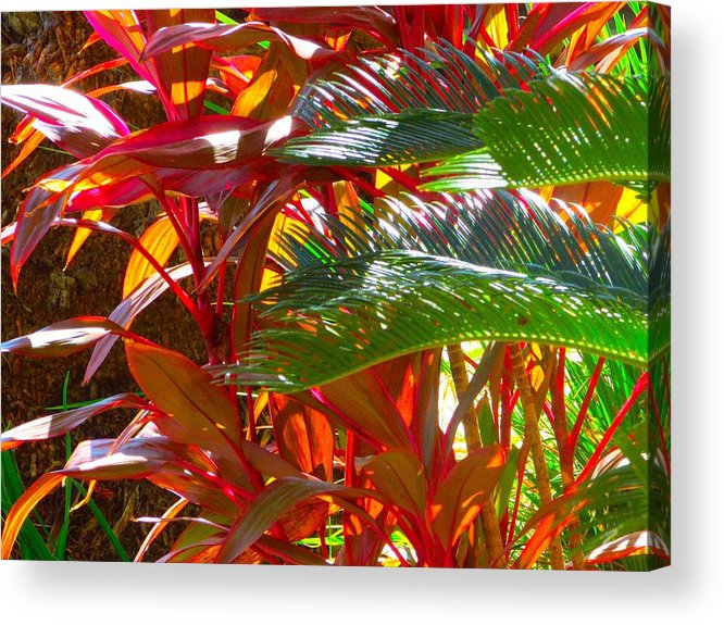 Landscape Plants Acrylic Print featuring the photograph Highlights by Gayle Price Thomas