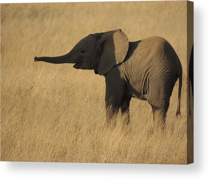 Elephant Acrylic Print featuring the photograph In The Shadow Of Her Mother by Lauren Armstrong
